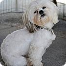 Adopt A Pet :: KALVIN