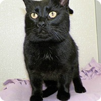 Adopt A Pet :: Mr Jessie - Dover, OH