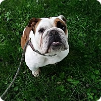Adopt A Pet :: Greenlee - Park Ridge, IL