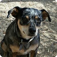 Adopt A Pet :: EYDIE - Scottsdale, AZ