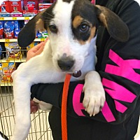 Adopt A Pet :: Sweetheart in CT - East Hartford, CT
