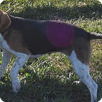 Adopt A Pet :: Trix - Prole, IA