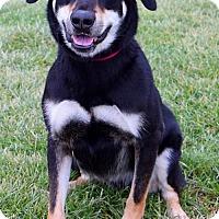 Adopt A Pet :: Tucker D-68560 - Westampton, NJ