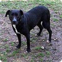 Adopt A Pet :: Nomma - Sudbury, MA