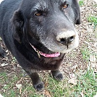 Adopt A Pet :: Sheba - Senior Special! - Allentown, PA