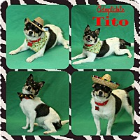 Adopt A Pet :: Tito - Troy, MI