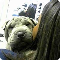 Adopt A Pet :: BUTCHEY - Atlanta, GA
