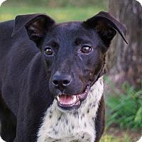 Adopt A Pet :: Lucy - Westport, CT