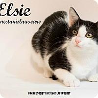 Adopt A Pet :: Elsie - Modesto, CA