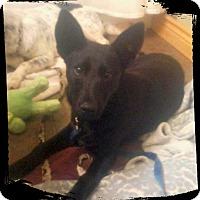 Adopt A Pet :: Cher - Denver, CO