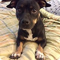 Adopt A Pet :: Java - Santa Ana, CA