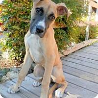 Adopt A Pet :: Ashton Logan - Tyler, TX