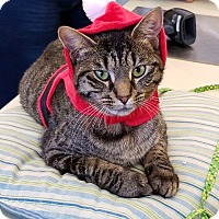 Adopt A Pet :: Xenia - Northfield, OH