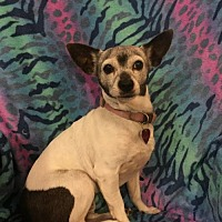Adopt A Pet :: Susie - SENIOR - Tomball, TX