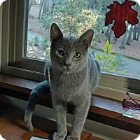Adopt A Pet :: Ash - Paradise, CA