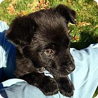 Adopt A Pet :: Maxi - Princeton, MN