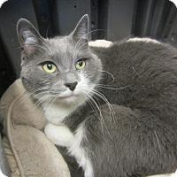 Adopt A Pet :: Scout - Kingston, WA