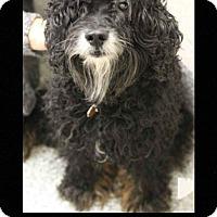 Adopt A Pet :: Maddox - Fallston, MD