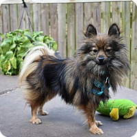 Adopt A Pet :: Spyder - conroe, TX