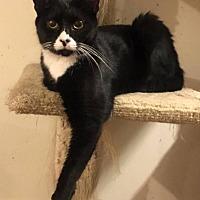 Adopt A Pet :: Daniel - Toms River, NJ