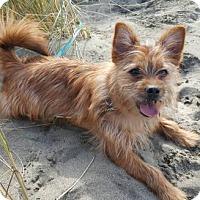 Adopt A Pet :: Max - San Francisco, CA