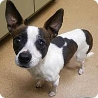 Adopt A Pet :: Stitch #164406 - Apple Valley, CA