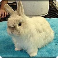 Adopt A Pet :: Baxter and Bennett - Williston, FL
