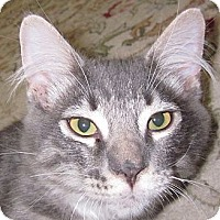 Adopt A Pet :: Tupert - Winchester, CA