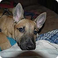 Adopt A Pet :: Esme (Esmeralda) - Hamilton, ON
