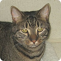 Adopt A Pet :: STITCH - 2014 - Hamilton, NJ