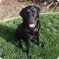 Adopt A Pet :: Shadow - San Francisco, CA