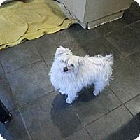 Adopt A Pet :: Fuzz - Freeport, NY