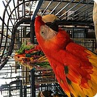 Adopt A Pet :: Malibu & Sabrina - Punta Gorda, FL