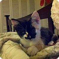 Adopt A Pet :: Mardi Gras - Ocala, FL