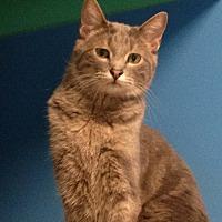 Adopt A Pet :: Galahad - Topeka, KS