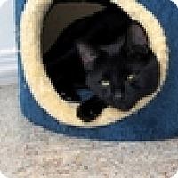 Adopt A Pet :: Ponyo - Vancouver, BC