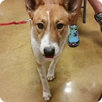 Adopt A Pet :: Smiley - San Antonio, TX