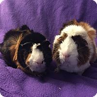 Adopt A Pet :: Elton John and Bernie Taupin - Fullerton, CA