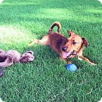 Adopt A Pet :: Eddie - Hamburg, PA