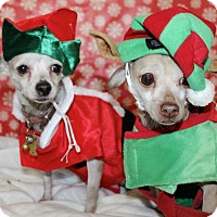 Adopt A Pet :: J-lo and Marc - Pompton lakes, NJ