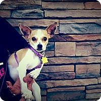 Adopt A Pet :: Timmy - Santa Ana, CA