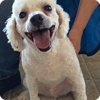 Adopt A Pet :: Jack - Santa Rosa, CA