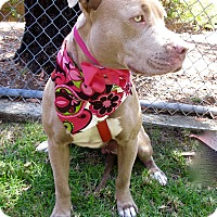 Adopt A Pet :: Jackie Brown - Irvine, CA