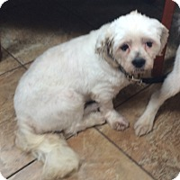 Adopt A Pet :: Casper- PUPPYMILL RESCUE - Oak Ridge, NJ