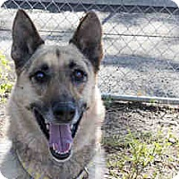 Adopt A Pet :: Annie - Agoura, CA