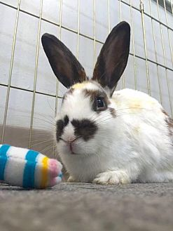 Rhinelander Mix for adoption in Los Angeles, California - Cookie