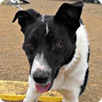 Adopt A Pet :: Ty - Yreka, CA