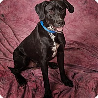 Adopt A Pet :: Mitch - Harrisonburg, VA