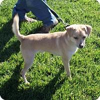 Adopt A Pet :: Rio - Apple Valley, UT