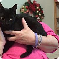 Adopt A Pet :: Sweetie - Sugar Land, TX